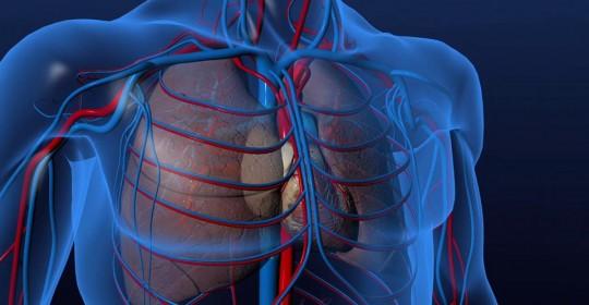 Le fonctionnement mécanique du cœur