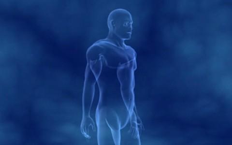 Le muscle, moteur du mouvement